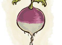 Turnip-ILLUS-spot